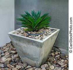 Tree in cube pot