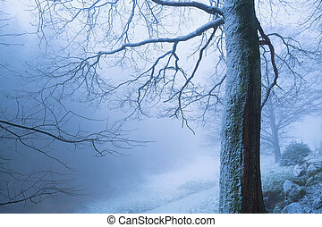 tree in deep winter fog