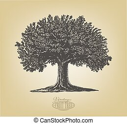 Vector illustration of a fruit tree in vintage engraving style. Isolated, grouped.