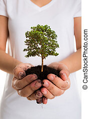 Tree in female hands