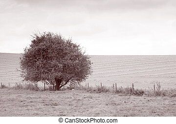 Tree in Field in Black and White Sepia Tone