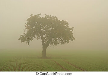 tree in fog 01