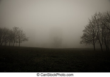 tree in foggy park