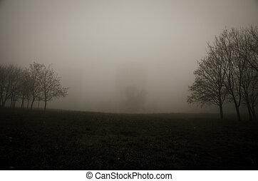 tree in foggy park