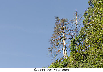 tree in forest and sky