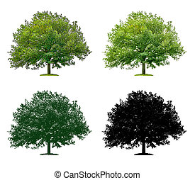Tree in four different illustration techniques - Oak Tree