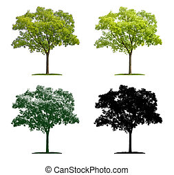 Tree in four different illustration techniques - Pagoda Tree