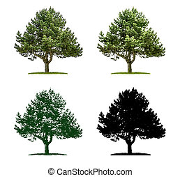 Tree in four different illustration techniques - Pine Tree