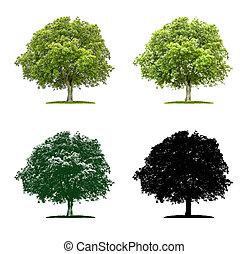 Tree in four different illustration techniques - Walnut tree