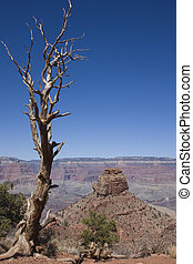 Tree in Grand Canyon