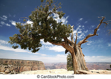 tree in Grand Canyon, Arizona, USA