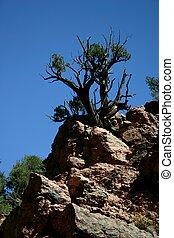 Tree in Granite
