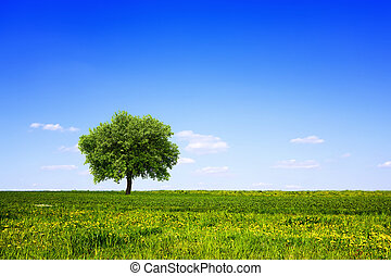 Tree in green field and blue sky