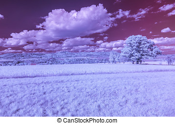 Tree in infrared light