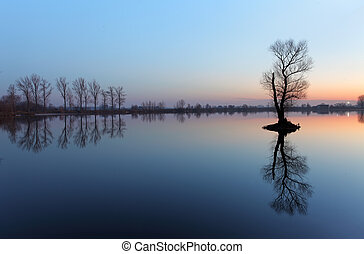 Tree in lake with color sky