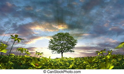 Tree in Meadow - 3D animation of the sun rising behind a...