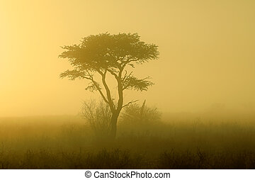 Tree in mist at sunrise - Kalahari desert