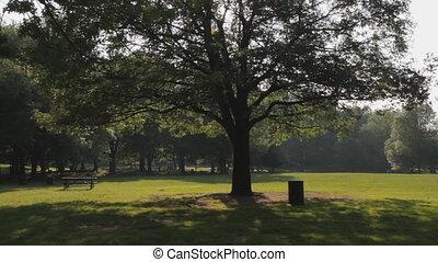 Tree in park.