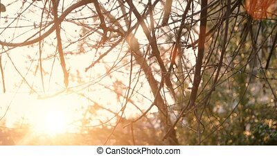 Tree in park with sunset on background, warm color with...