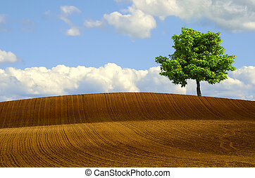 Tree in plowed fields