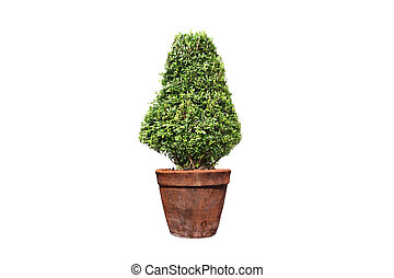 tree in pot on isolated