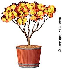 Tree in pot plant