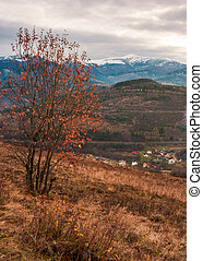 gloomy late autumn scenery - tree in red foliage on...