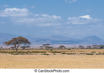 tree in savannah, typical african landscape - trees in ...