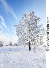 tree in snow against blue sky. Winter scene.