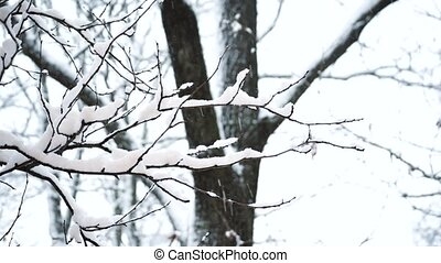 Tree in snow. Beautiful scenic winter scene in forest