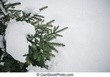 tree in snow in the winter