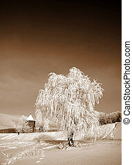 tree in snow. sepia