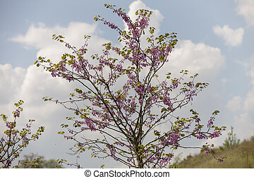 tree in spring