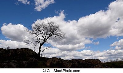 Tree in steppe swaying on a wind