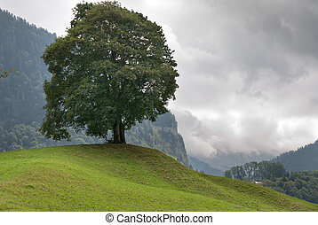 Tree in Switzerland