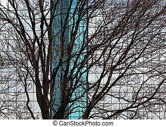 tree in the city