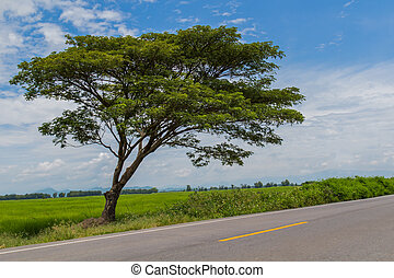 tree in the country road