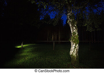 Tree in the evening illuminated with a torch. Light painting...
