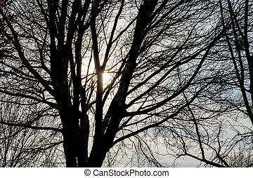 tree in the evening sun