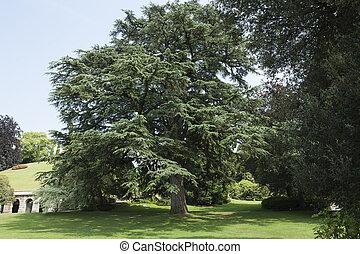 tree in the garden