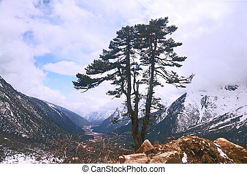 Tree in the Himalayas