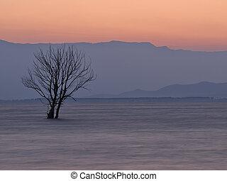 Tree in the lake at dawn