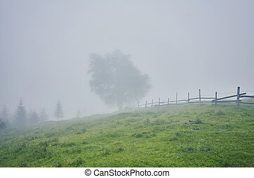Tree in the meadow in the mist