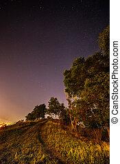 tree in the night sky