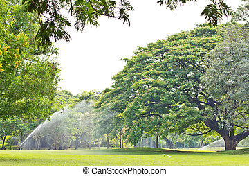 Tree in the park