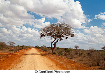 Tree in the savannah of Kenya, blue sky with clouds, a red road
