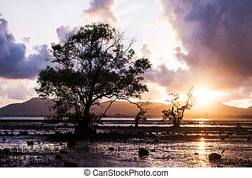 Tree in the sea with color of sunset and storm cloud
