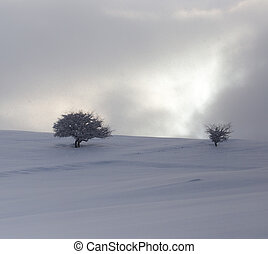 tree in the snow at dawn sun
