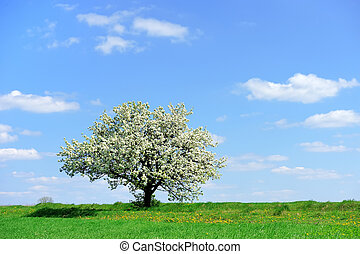 Tree in the spring
