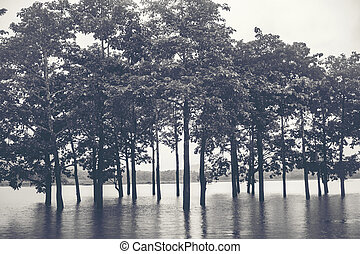 tree in the water lake